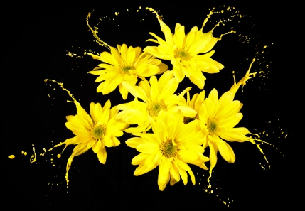 yellow flowers-shutterstock_121361704